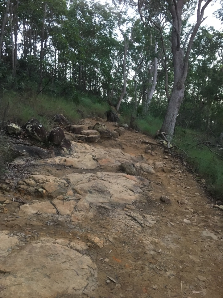 Path to the top of Mt Ngungun